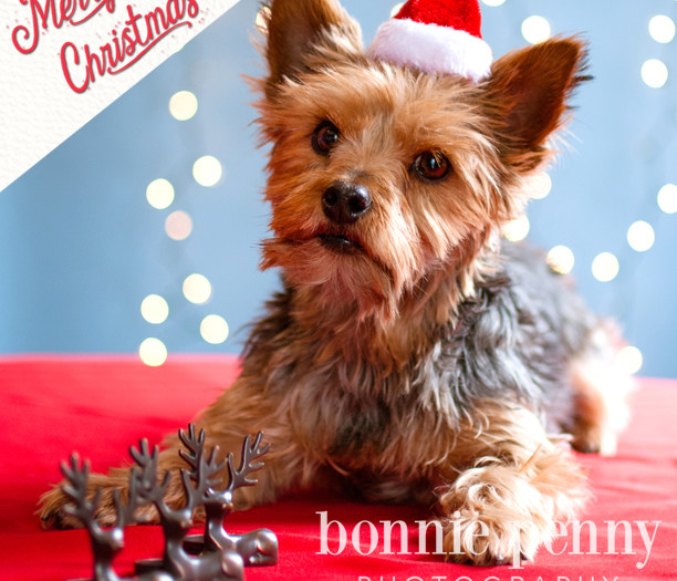 Merry Christmas and Happy Holidays from Bonnie Penny Photography